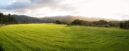 Nouvelle-Zélande le lever du soleil sur le terrain vert