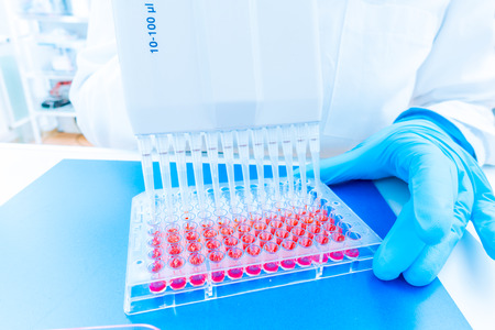 pcr: 96 well plate for PCR processing, microbiological laboratory Stock Photo