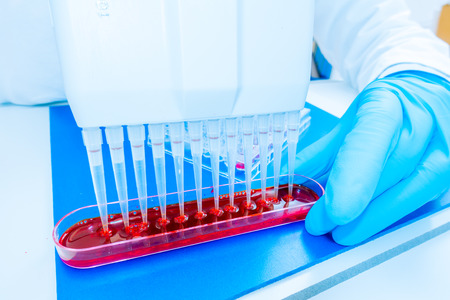 micropipette: 96 well plate for PCR processing, microbiological laboratory Stock Photo