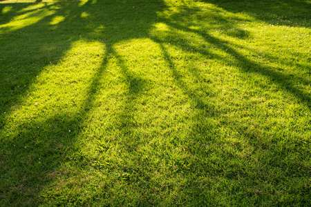 convergence: Tree shadow on short green grass in spring Stock Photo