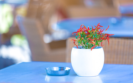 gorinchem: Table with flower in street cafe Stock Photo