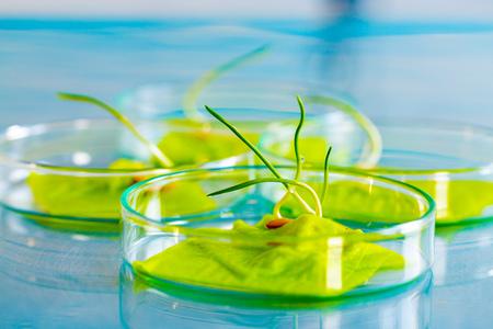 botany: Plant leaf in Petri dish