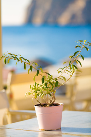 ocean plants: green plant on beach cafe table