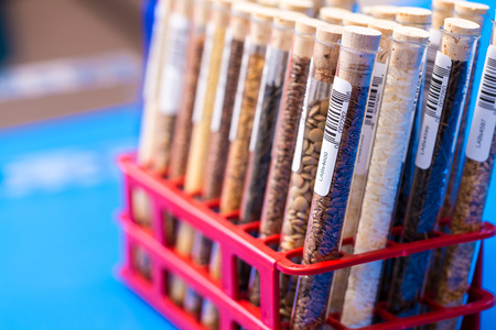 food testing: Seeds of agricultural plants in test tubes with bar code. GMO Test