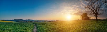 Lever de soleil sur le ciel champ vert au printemps, panorama paysage rural