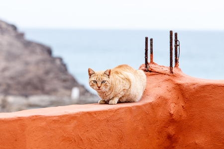 red wall: Red cat on red wall