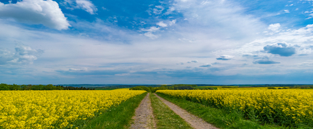 south africa soil: canola field and dirt road Stock Photo