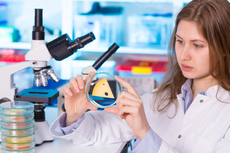pesticides: Quality control expert inspection at cheese in the laboratory, pesticides and herbicides content in diary products test Stock Photo
