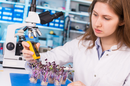 pesticides: Quality control expert inspecting at young plans in the laboratory, pesticides and herbicides content test