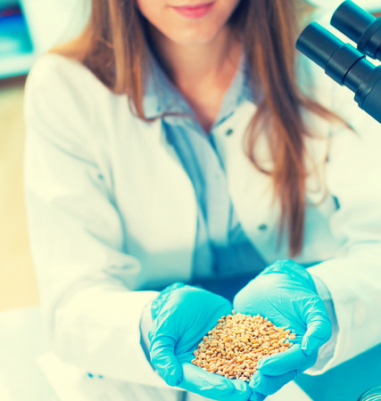 leguminosas: girl in the laboratory of food quality tests legumes grain