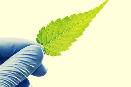 vida natural: Hoja verde de una planta en la mano del científico