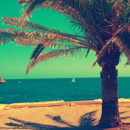 old photo: palm. sea and lighthouse. old toned photo