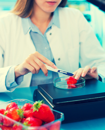 food research: checking food  Strawberries, on the content herbicides and pesticides Stock Photo