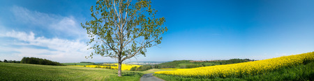 uk: Tree and rape field panorama Stock Photo