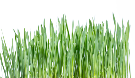 petri dish: Green young plant in petri dish in botanic laboratory