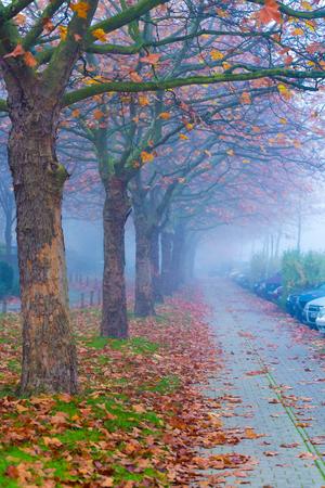 Bomen in mistige herfst straat met auto Stockfoto