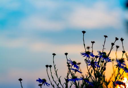 silhouette fleur: Silhouette de la fleur coucher de soleil