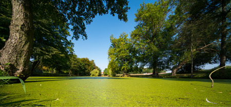 The pond overgrown with green duckweed