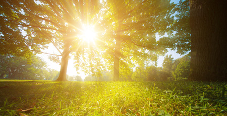 sun rays through trees leaves