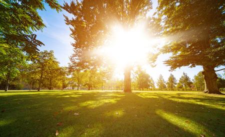 shining through: sun rays through trees leaves