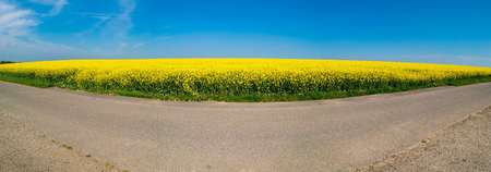 canola: Canola field Stock Photo