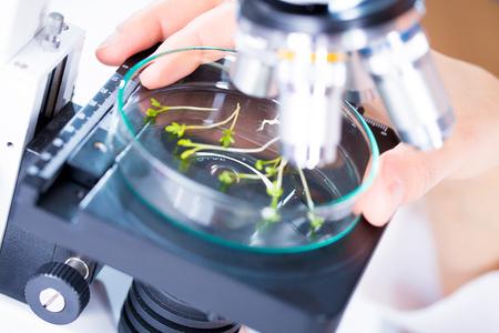 GMO plant researsh in genetic laboratory