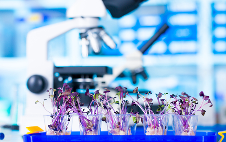 laboratory research: Woman science Assistant in laboratory with researsh GMO Plant