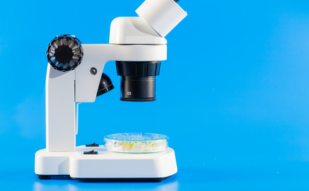 petri: Seeds and shoots of genetically modified cereals in a petri dish. On a microscope table Stock Photo