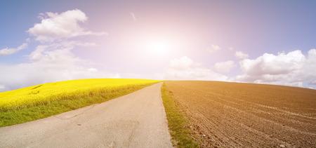rappi: Rapeseed field on a sunny day, Rapeseed (Brassica napus), also known as rape,   oilseed rape, rapa, rappi, rapaseed
