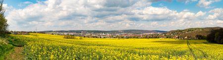 Rapeseed field on a sunny day, Rapeseed (Brassica napus), also known as rape,   oilseed rape, rapa, rappi, rapaseed