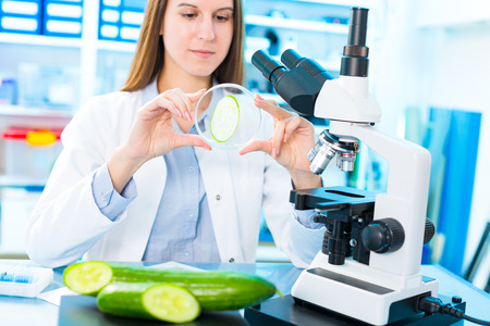 food inspection: Checking fruit and vegetables for harmful elements. Laboratory for Inspection of Food Quality Stock Photo