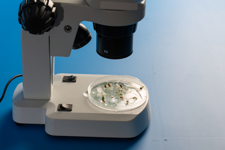 Research plant sprout under microscope Редакционное