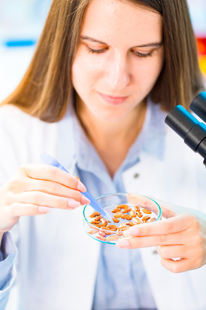 productos quimicos: Selective and genetic work with seeds and grains in a scientific laboratory. Food quality control