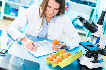 Eggs product research. Quality control processing foods. Stock Photo