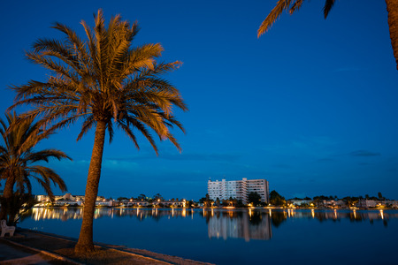 Palm trees near the lake at night
