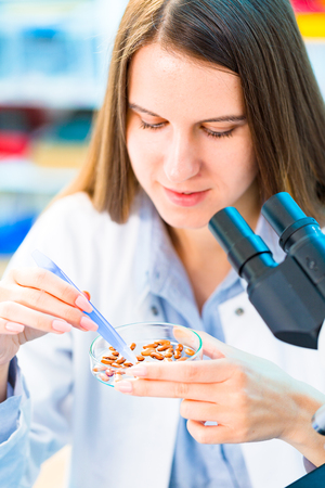 modified: Selective and genetic work with seeds and grains in a scientific laboratory. Food quality control