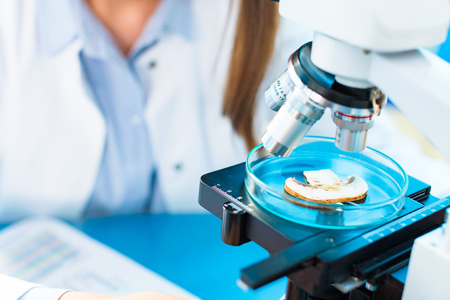 Champignon mushroom research in laboratory.  Food Processing and Quality Control mushroom