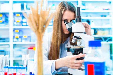 과학 실험실에서 종자 및 곡물과 함께 선택적이고 유전 적으로 작용합니다. 식품 품질 관리 스톡 콘텐츠