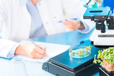 Investigación de la fotosíntesis de plantas verdes. Control de la calidad de los alimentos de los planes agrícolas Foto de archivo - 85258811