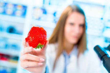 Strawberry fruit research in laboratory. Food Processing and Quality Control