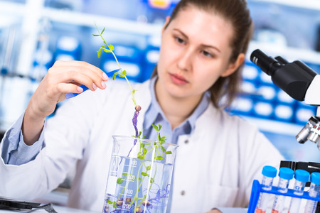 technician in the laboratory of plant genetics investigates the sprout of soybean Banco de Imagens - 90186064