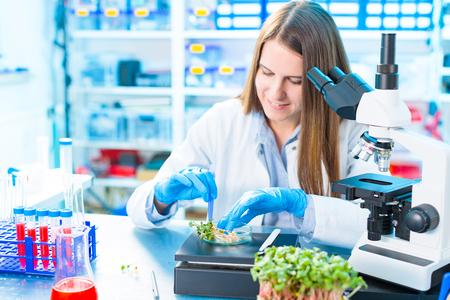 Onderzoek naar fotosynthese van groene planten. Voedselkwaliteit controle van landbouwplannen Stockfoto