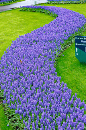 Flowerbed with tulips and hyacinths Stock Photo