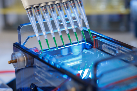 loading amplified DNA samples to agarose gel with multichannel pipette 스톡 콘텐츠