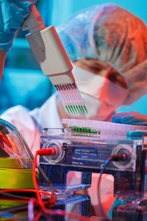 scientist loads pcr plate for DNA analysis with multichannel pipette Stock Photo