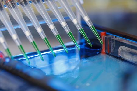 het laden van geamplificeerde DNA-monsters in agarosegel met meerkanaalspipet