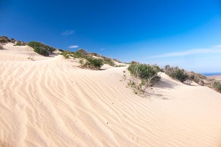 Green shrub plant in the sandy desert Stock Photo
