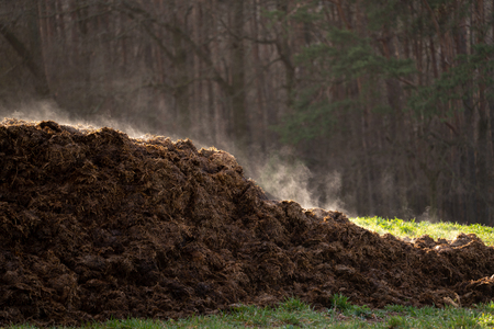 Pile of manure on an agricultural field for growing bio products Standard-Bild - 119684933