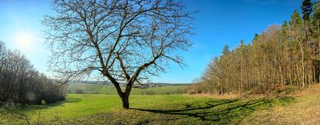 Solo árbol un día soleado a principios de primavera