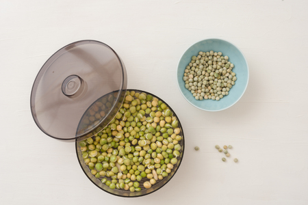 device for germination of seeds and obtaining useful sprouts for salads